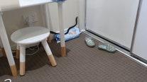 Venomous snake found in kid's bedroom