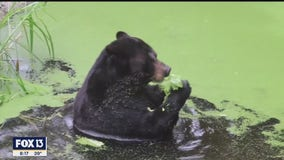 At ZooTampa, some animals do not like the cold