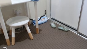 Venomous snake trapped after it was found in child's bedroom