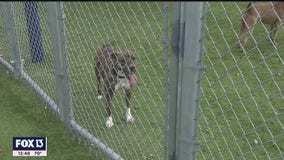 2020 forced changes at Hillsborough County Pet Resource Center