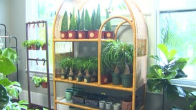 Houseplants for every lifestyle shipped from Yuravine Bros. in South Tampa