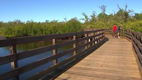 Take in the old Florida ecosystem of Emerson Point Preserve