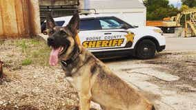 Illinois K-9 officer killed in the line of duty by intoxicated driver