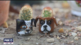 St. Pete gardener's succulents offer year-round joy in tiny clay pots