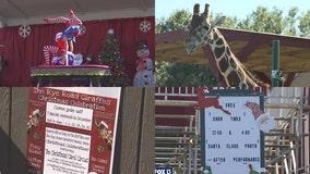 Rye Road Giraffes help celebrate Christmas this weekend