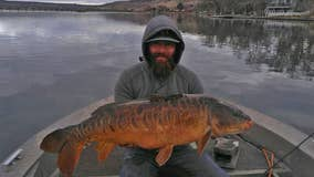 Idaho fisherman sets new record for mirror carp just months after previous record