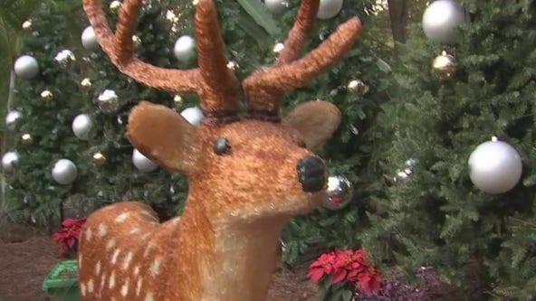 'Tis the season for 'Christmas in the Wild'