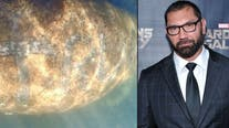 Marvel, WWE star Dave Bautista offers $20K reward to find person who scraped 'TRUMP' on manatee's back