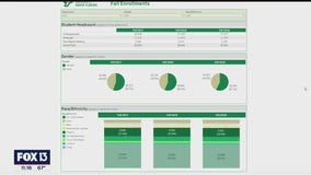 USF launches diversity, equity, and inclusion reporting website