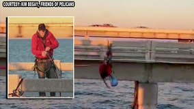 Good Samaritan performs zip-line rescue of entangled pelican on Skyway