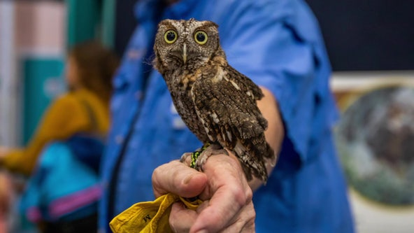 Birds of prey on display at Clearwater Marine Aquarium