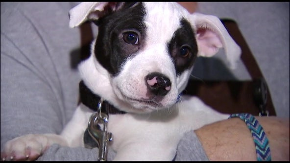 Bay Area rescue group helps the homeless care for pet companions