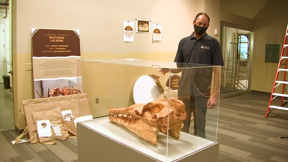 Tampa Bay History Center opens year-long Florida fossil exhibit