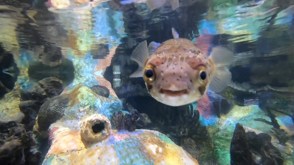 A visit to Mote Marine Aquarium supports research efforts