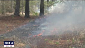 Crews torch more than 200 acres in Polk County as part of prescribed burn