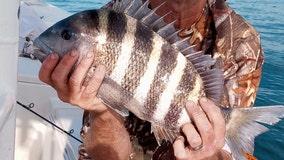 Fishing Report: Feb. 2, 2021