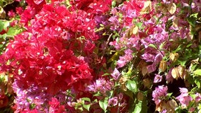 When to water, trim, fertilize flora for a stunning backyard Florida garden