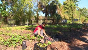 Amateur gardeners find green thumb at Sweetwater Organic Community Farm
