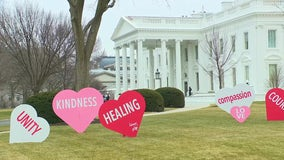 First lady Dr. Jill Biden installs Valentine's Day hearts on White House lawn