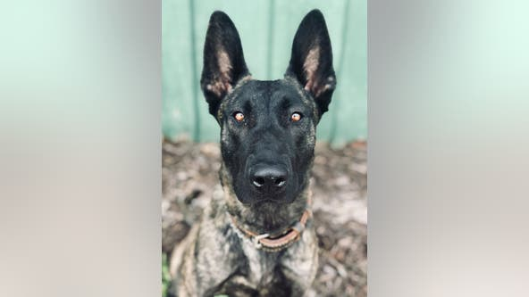 Duluth Police K-9 shot, killed during hours-long standoff