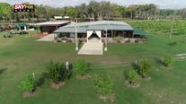 Drone Zone: Lemon orchard on the lake wedding venue
