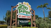 ZooTampa at Lowry Park begins vaccinating animals against COVID-19