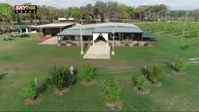 Drone Zone: Lemon orchard on the lake wedding venue