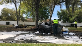 PCSO: Hit-and-run driver killed after car crashes into tree, bursts into flames while fleeing the scene