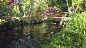 For more than a century, Sunken Gardens has been a tropical oasis in the middle of downtown St. Pete
