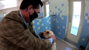 Tampa businessman 'steps up' to help provide guide dogs to visually impaired veterans, children