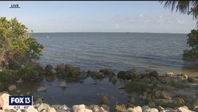 New report reveals troubling water quality trends in Old Tampa Bay
