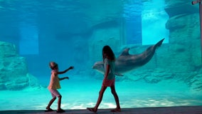 Guests of all species can now enjoy Clearwater Marine Aquarium's expansion