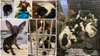 Reward offered for information in case of 26 abandoned puppies, dogs