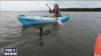 Experience water and wildlife on a kayak tour