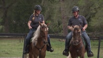 2 rescued mustangs are newest members of Hernando County Sheriff's Civilian Mounted Unit