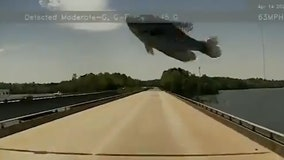 Video captures bird dropping fish onto a trucker's windshield