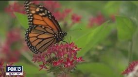 Spring has sprung at the Florida Botanical Gardens in Largo