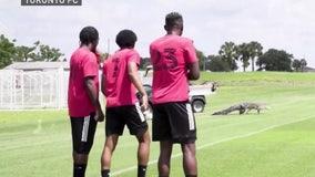WATCH: Massive alligator runs onto Orlando soccer field during team practice