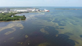 Impact of Piney Point water release on Tampa Bay may not be known for months
