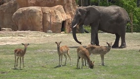 ZooTampa may begin vaccinating animals against COVID-19 this summer or fall