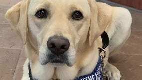 COVID-19-sniffing dog adds extra layer of protection at Sarasota hospital