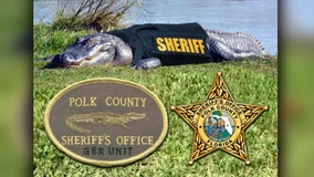 Polk County Sheriff's Office introduces its 'gator unit' for April Fool's Day