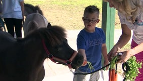 Small horses can provide big boost to patients of all ages