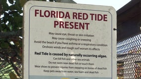 Warning signs posted after low levels of red tide detected along Sarasota beaches