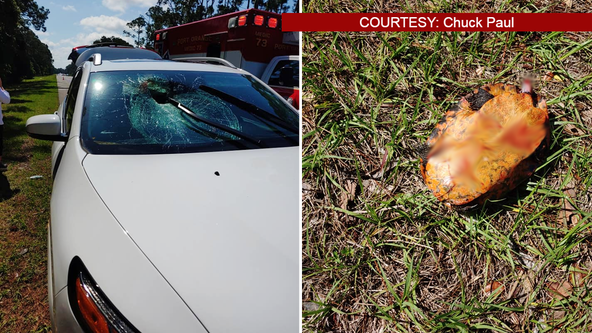 Turtle crashes through windshield of car traveling on I-95