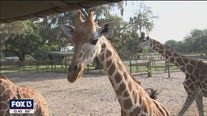 Giraffe Ranch offers 50 species of animals to experience