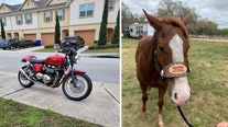 Great Rides: 2010 Triumph Thruxton and 'Sting'
