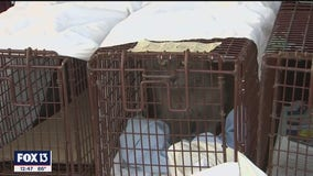 Friends of Strays Animal Shelter receives grant to help control cat population