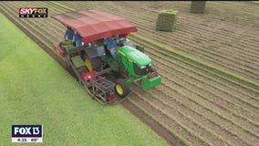 Drone Zone: Bay Breeze Farms sod fields