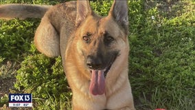 South Tampa community comes together to search for missing dog